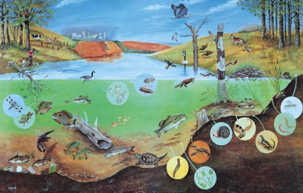 √ Ekosistem : Pengertian, Komponen dan Jenisnya Lengkap